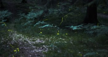 fireflies in a park at night
