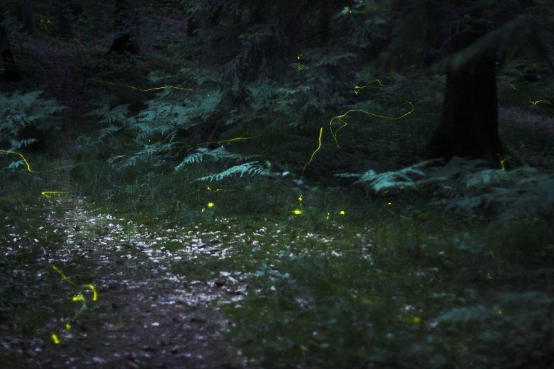 上海一公园建立萤火虫保护区