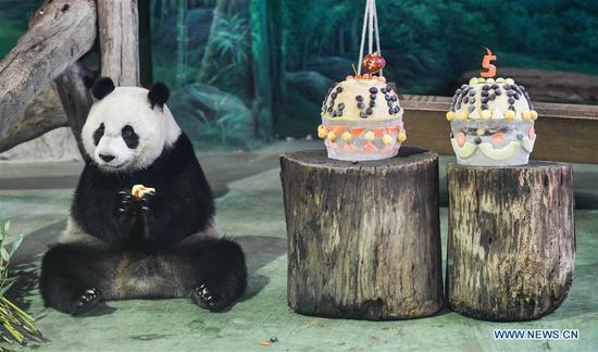 panda sitting next to birthday cake at taipei zoo