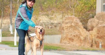 guide dog with handler in china