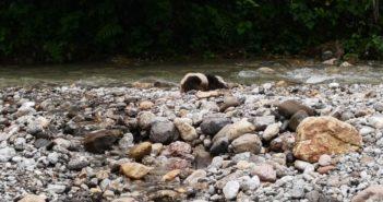 dead panda on riverbank in sichuan