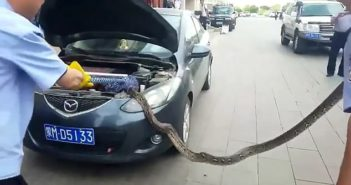 python being removed from car engine in china