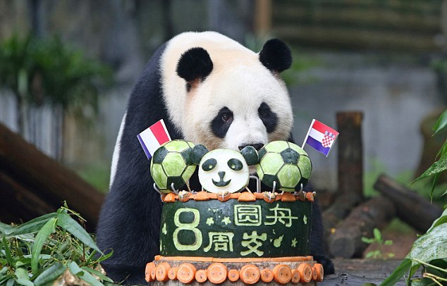 panda with football cake in shenzhen