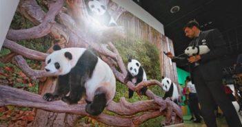 man looking at painting of pandas at exhibition