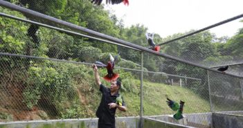 keeper in age with parrots at rescue centre in guangzhou