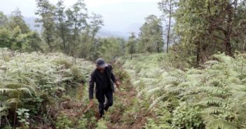 man walking through forest on mountain in yunnan