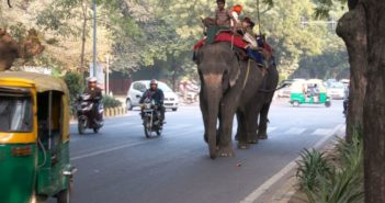 people riding elephant down the street in india