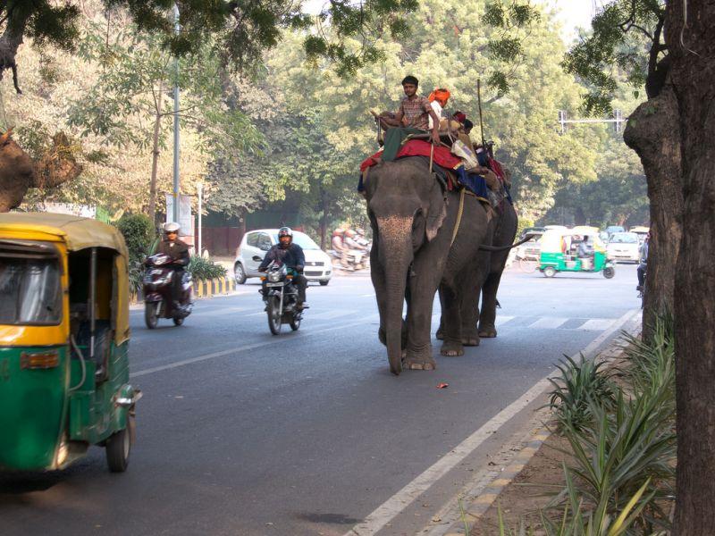 新德里最后六只大象正等待新家