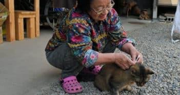 elderly woman stroking cat