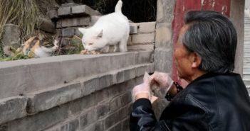 elderly man feeding cats in china