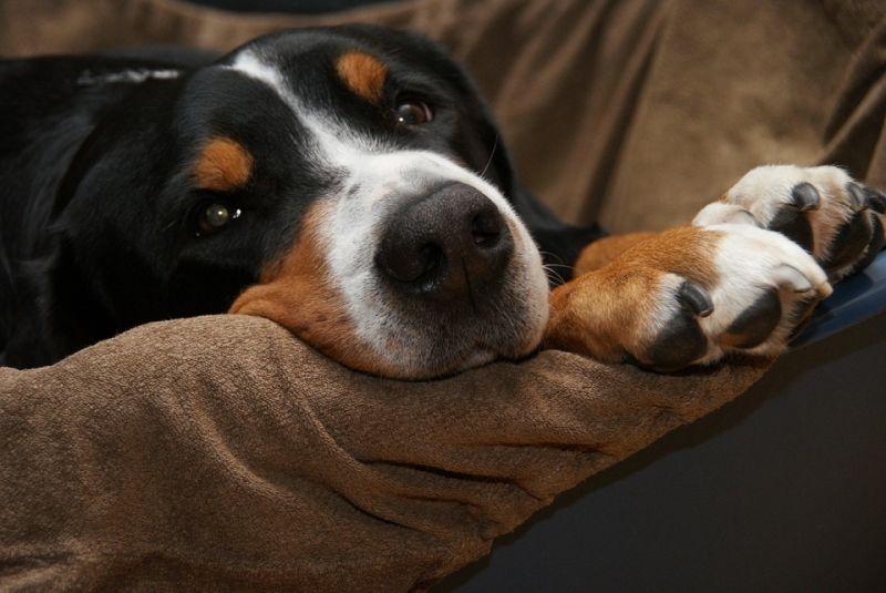 调查发现中国人在宠物身上的花费越来越多