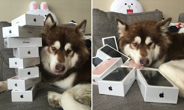 two images of dog with iphone 7s