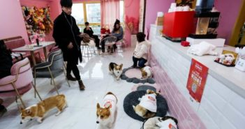 cafe with dogs in china
