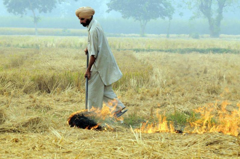 farmer burning straw in india