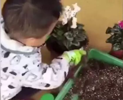 image from video of toddler planting flowers in china