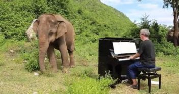 man playing piano to elephant in thailand