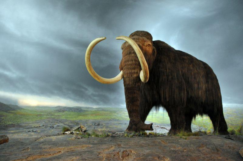中国北方发现猛犸象脚印
