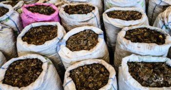 sacks of pangolin scales seized in hong kong