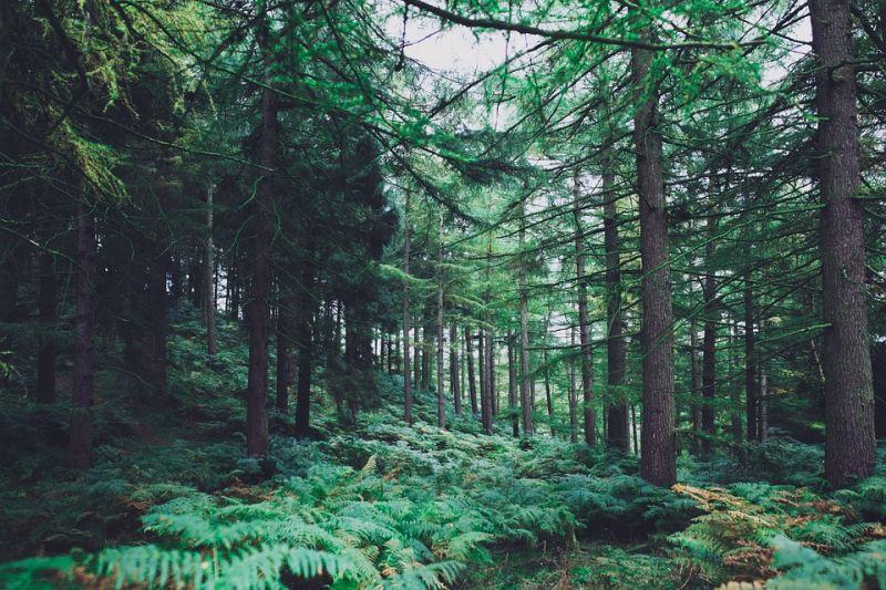 报道称中印两国绿化面积增加