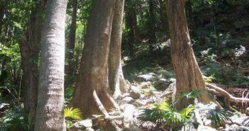 base of trees in rainforest in australia