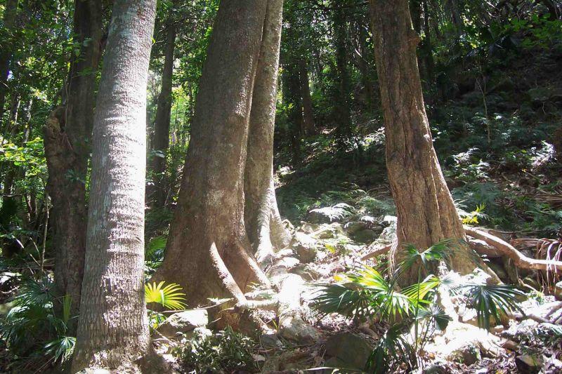 澳大利亚计划在11年内种10亿棵树