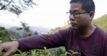 man checking tea leaf crop in china