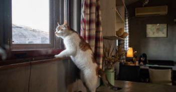 cat standing on chair and looking out of the window