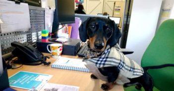 dog sitting at desk
