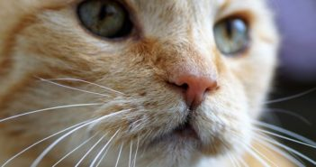 close up view of cats face