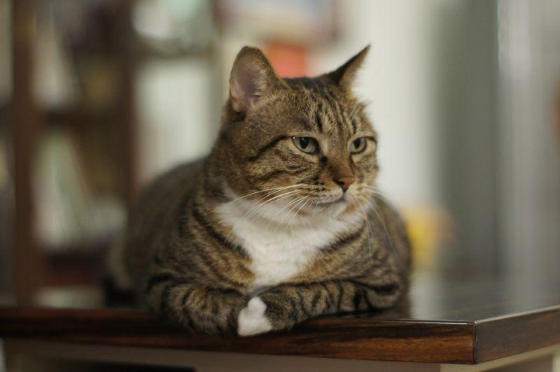 宠物猫带动中国产业发展