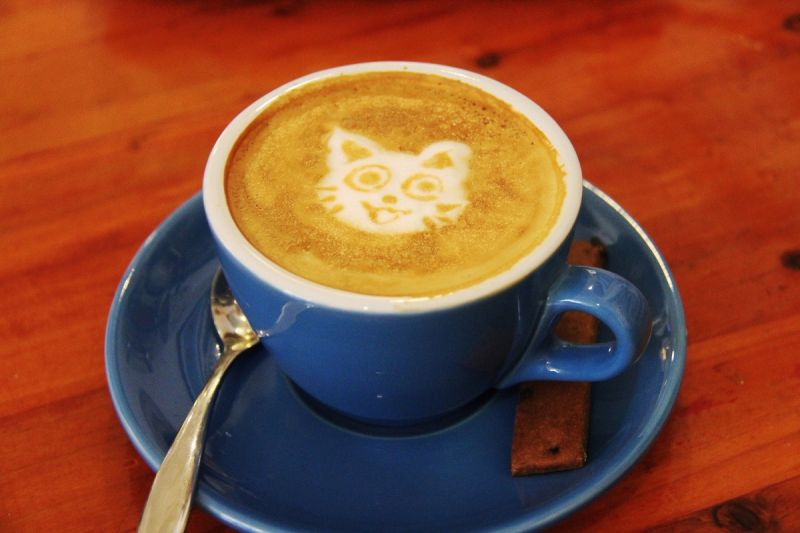cup of coffee with cat design on top