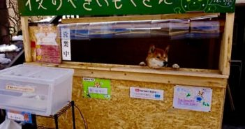 dog shopkeeper at small store in japan