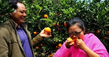 girl trying tangerine next to father