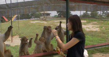 woman feeding animals at zoo in china