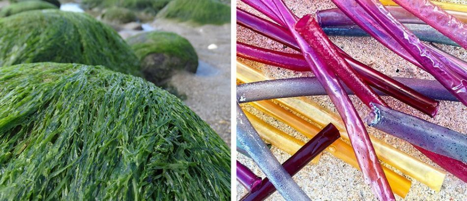 seaweed on the left, straws on the right
