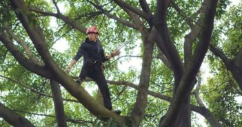 man in harness climbing tree