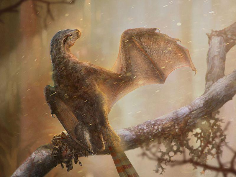 """中国科学家发现了""""蝙蝠""""恐龙"""