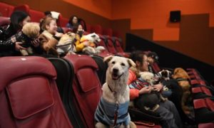dogs with owners watching movie
