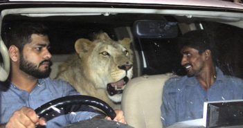 lion in car with two men