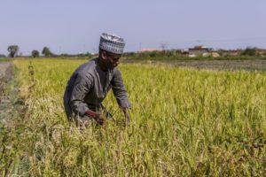 man tending his crop in nigeria