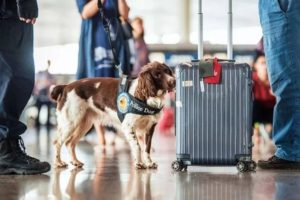 sniffer dog sniffing luggage