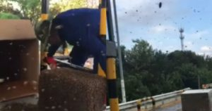 two images showing bee swarm at poll station in china