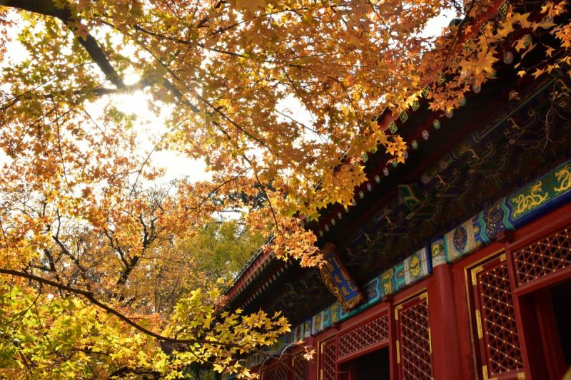 autumn setting in beijing