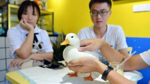 people with duck at duck cafe in chengdu