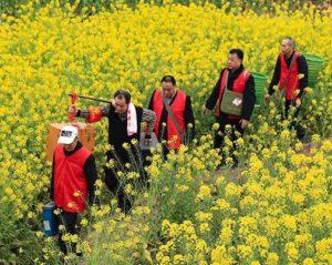 mobile cinema team walking through a field