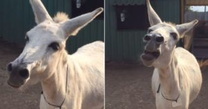 two images of a donkey in india