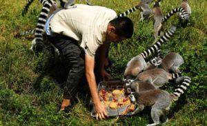 man feeding racoons mooncakes