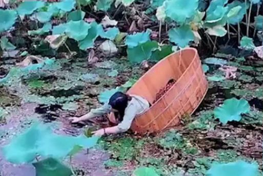 woman collecting chestnuts from pond in wooden tube
