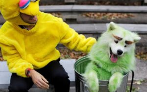 owner dressed as chicken sitting next to dog dyed green in a bin