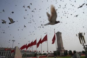 pigeons flying across tiananmen square for national day